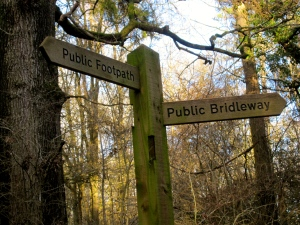 Two roads diverged into a (British) wood